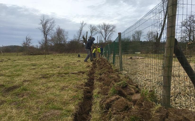 Haagplantactie bij ArcadiaMuizen