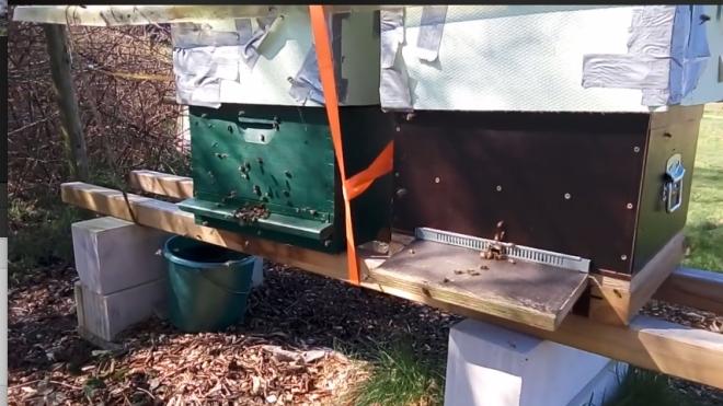 honingbijenma